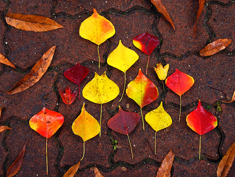 drops arrengement #001 'fallen leaves whisper'