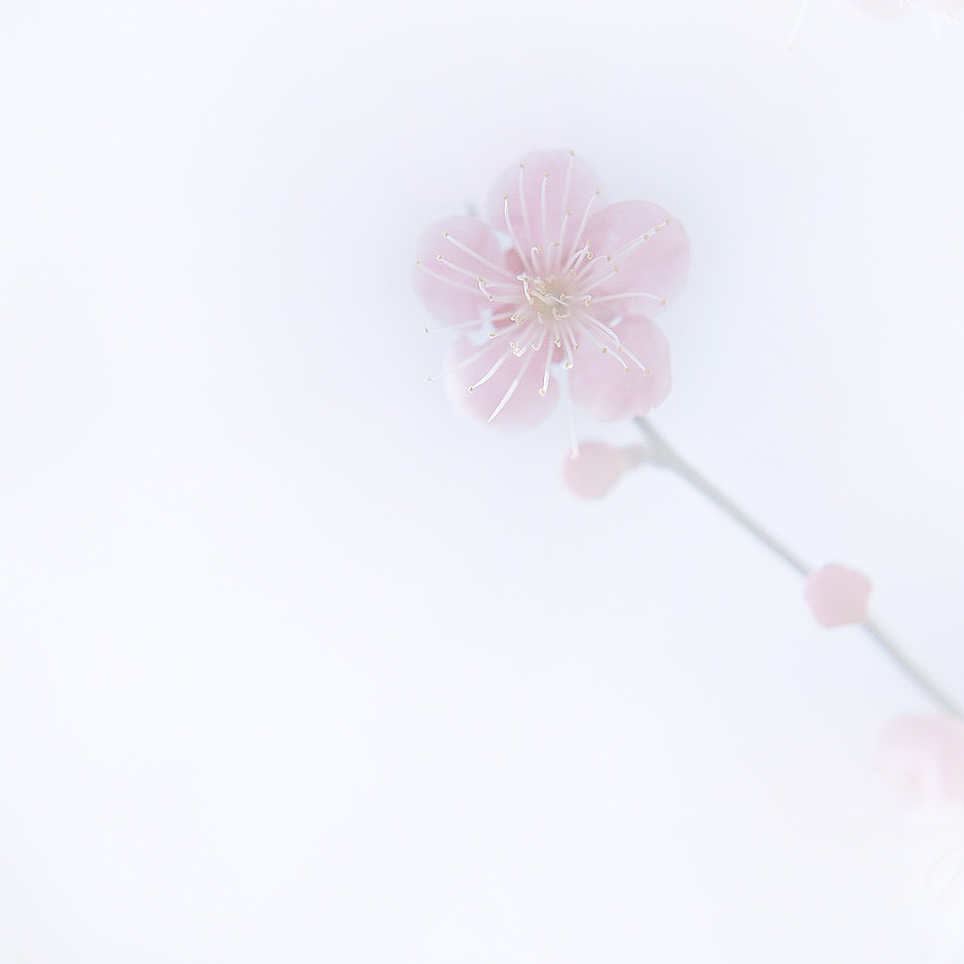 kimi no mahou (ur magic)