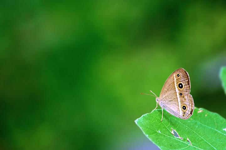 look butterfly