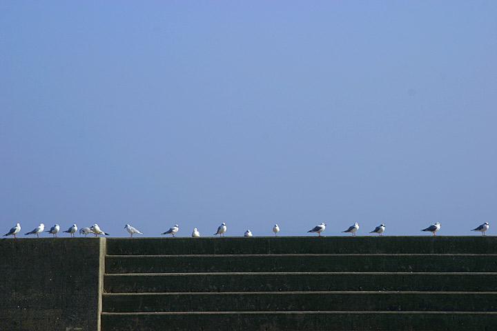 29848-gulls-scene.jpg