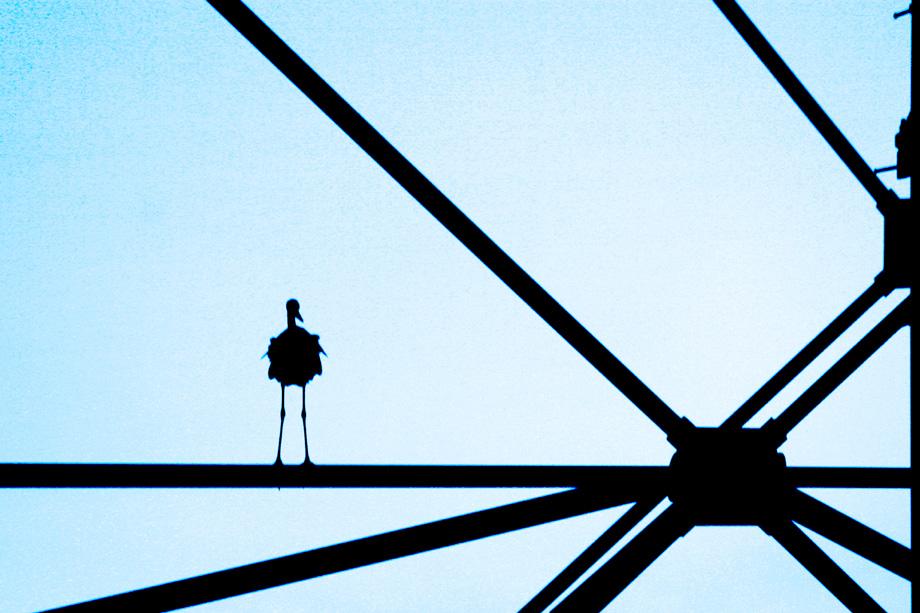 look heron 'cage'