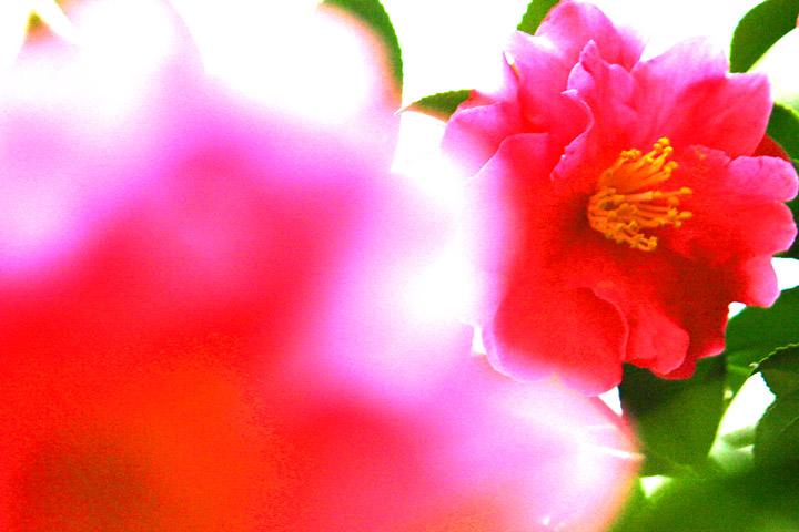 fleur rouge #2