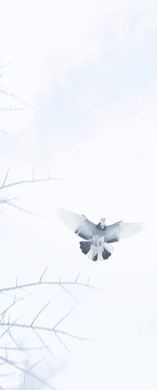 """look bird """"peaceful sky"""""""