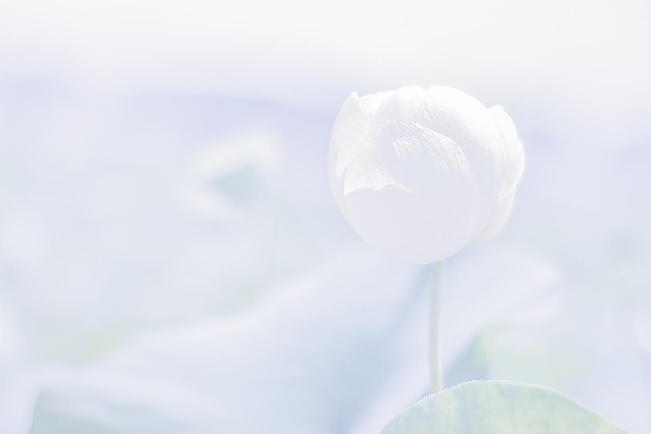 white moments